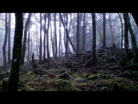 Steven Cambian - Truthseekers Episode 0033, Mysterious places : Aokigahara, Japan's suicide forest w/Jason Quitt. Hqdefault