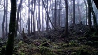 Suicide forest japan ghost caught on video by exploring with josh