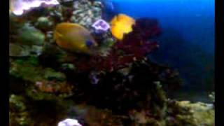 морской аквариум(, 2011-08-14T11:21:41.000Z)