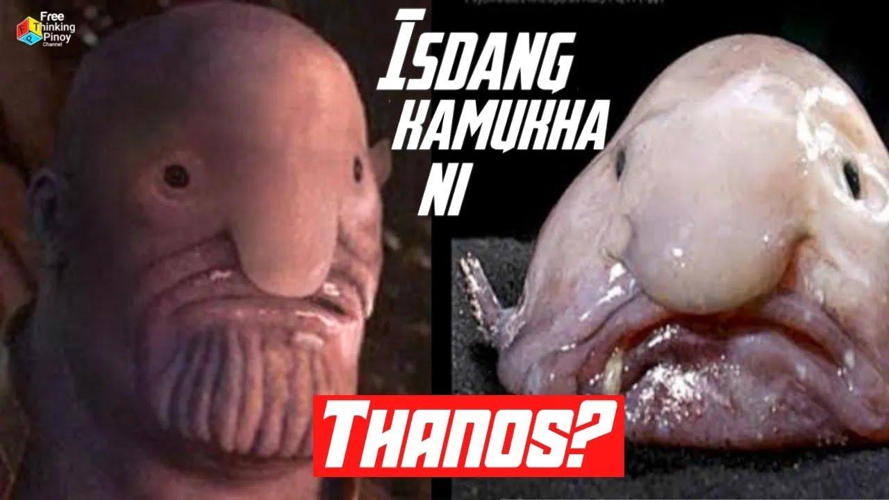Download PANUORIN! ANG MGA NAKAKATAWA NA ISDA | Strange and Funny Fish LOL