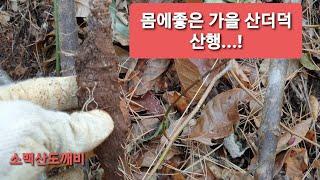 가을 산더덕 산행...몸에좋은 가을 자연산더덕 자생지.…