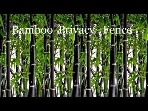 *Plant Black Bamboo Plants* +Privacy Screen*Live Privacy Fence+