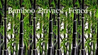 Plant A Black Bamboo Plant Privacy Screen