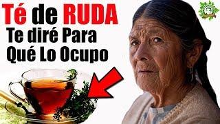 Te De RUDA Beneficios Mira Todo Lo Que Ayuda Para Tu Salud No La DEJARAS DE TOMAR