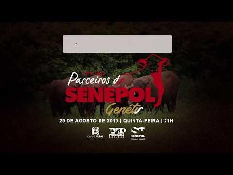 Convite Especial Leilão Touros Parceiros do Senepol 2019