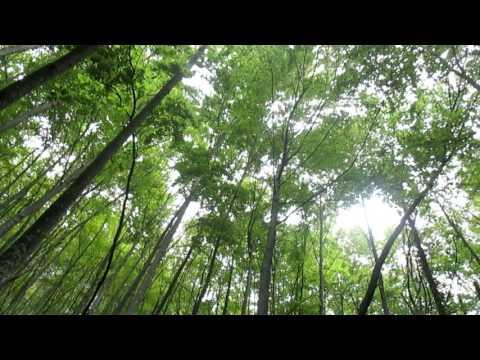 Suoni della Natura: UCCELLI DEL BOSCO