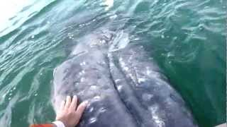 チューしちゃってもいいかしら?人懐っこいクジラとの触れ合いタイムに超感動