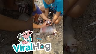 Baby Monkey Rescued from Deceased Mother's Womb || ViralHog