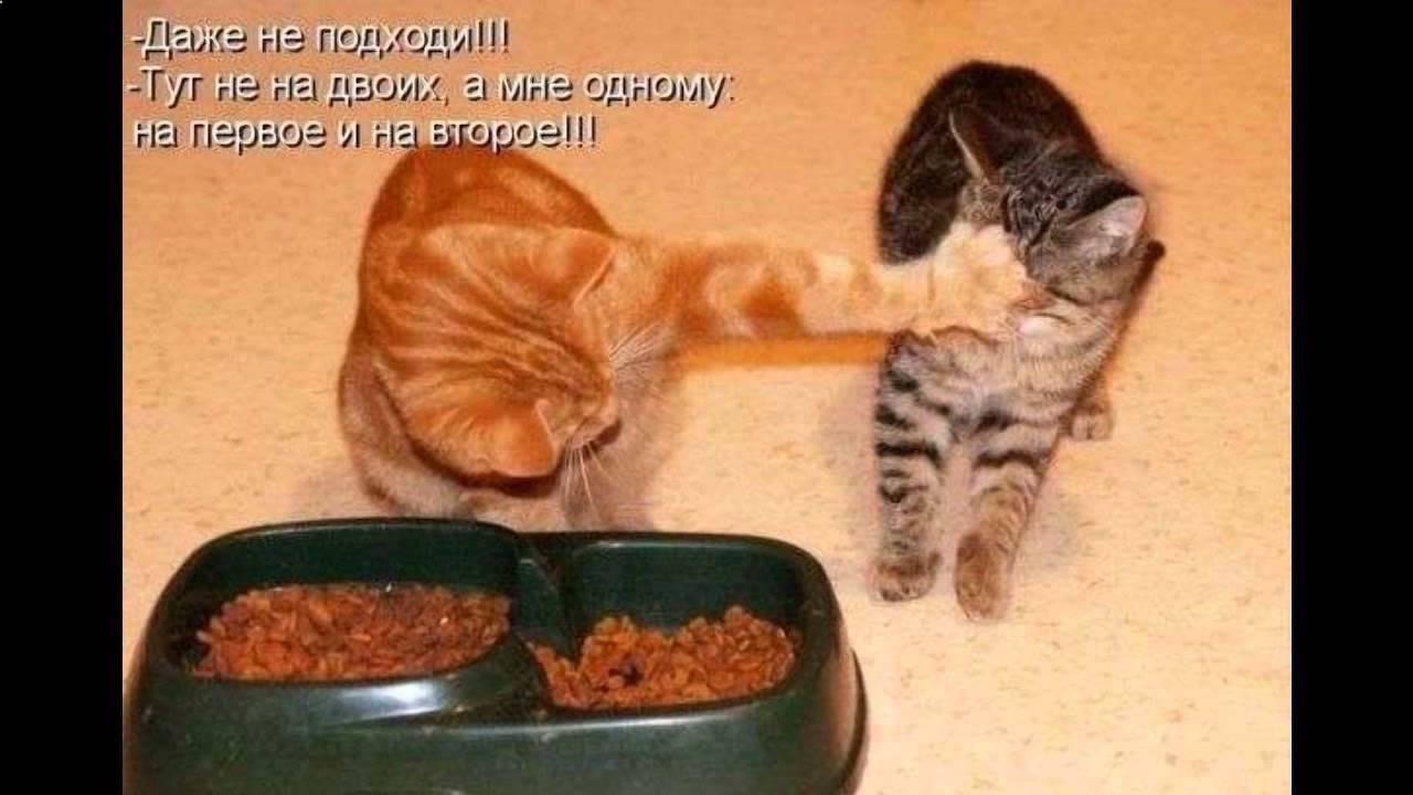 Смешные коты фото с надписями - YouTube