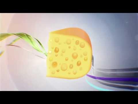 Сыр с дырками в домашних