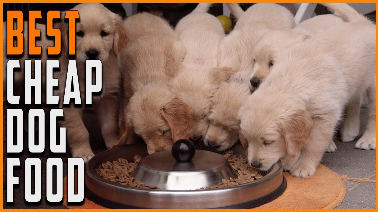 Best Cheap Dog Food - Best Budget Friendly and Affordable Dog Foods