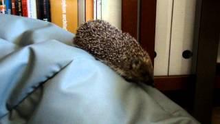 DRACO - Fundacja Głosem Zwierząt - Draco i jeż