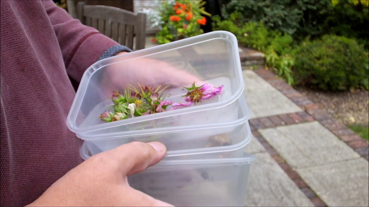 Autumn Seed Collecting From Annuals And Perennials Youtube