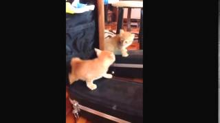 Рыжий кот и зеркало