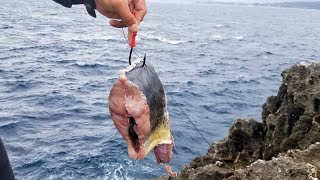 The power of a giant bait! Fishing in Japan