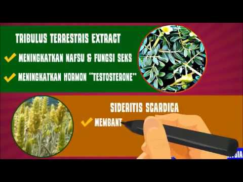 herba terbaik untuk libido hammer of thor youtube