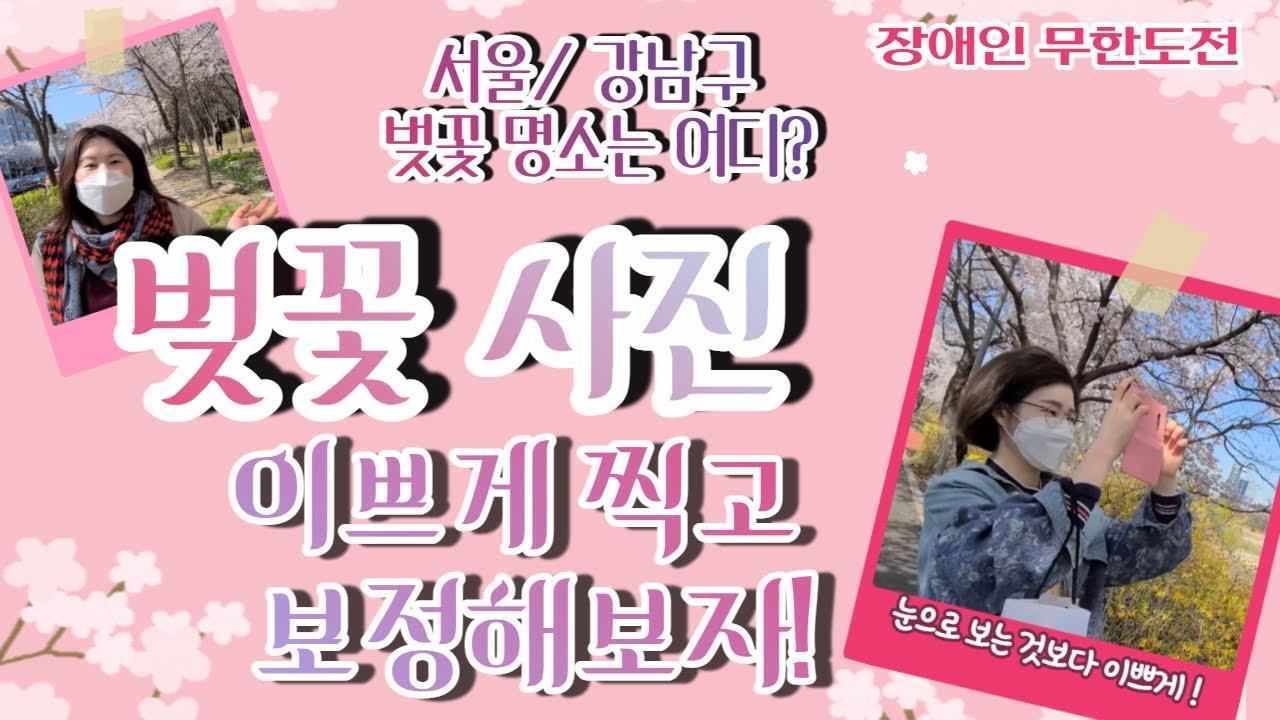 서울/강남구 벚꽃 명소는 어디? 벚꽃 사진 이쁘게 찍고 보정하기🌸🌼☀️
