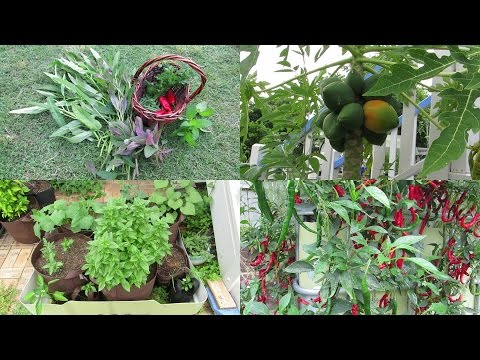 Urban Farm Vlog. Front yard veggie beds, seed starts & a wander down the back..