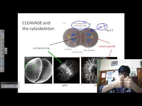 Developmental biology lecture | embryo development