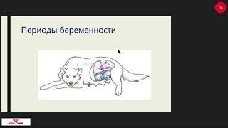 Беременность и роды у собак