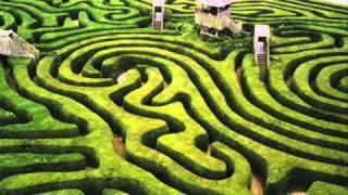 Des Ree Crazy Maze.mp3