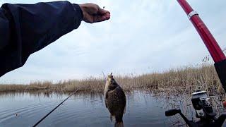 Бешеный клев карася! Рыбалка на поплавок!