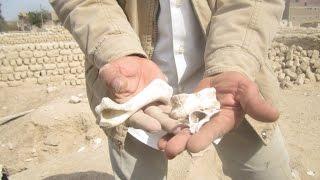 صور وفيديو| هوس التنقيب عن الآثار يصل لنبش القبوربـ«عزبة البوصة» بقنا | النجعاوية