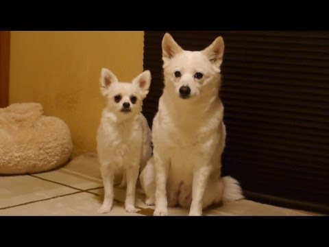 These Dogs Are You And Your Boyfriend When He Wants To Hook Up And You're Just Not In The Mood