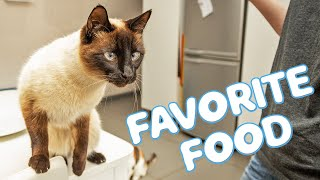 This is the best food for Siamese Cats