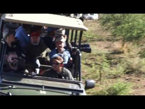 Pilanesberg Cheetah