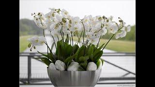 ПОЛИВ ОРХИДЕЙ .КАК ПРАВИЛЬНО УХАЖИВАТЬ ЗА ОРХИДЕЕЙ . ОРХИДЕЯ . КОМНАТНЫЕ РАСТЕНИЯ .(Дорогие поклонники орхидей, очередное видео для вас! В этом видео я раскрою поподробнее тему о поливе орхид..., 2014-11-08T01:38:04.000Z)