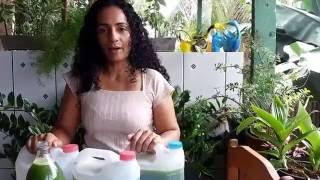 SABÃO LIQUIDO DE FOLHA DE MAMÃO – O MAIS BARATO DO MUNDO