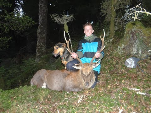 Repeat 2019 Red stag roar public land NZ by H & S Hunting Adventures