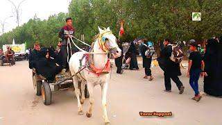Download Traveling Iraq Arbaeen Walk Najaf To Karbala City Middle East