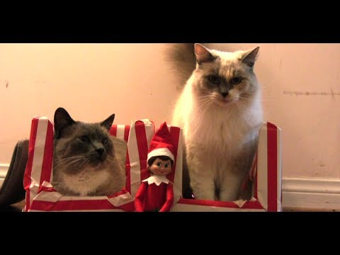 Elf On The Shelf Watches Cats For Christmas YouTube