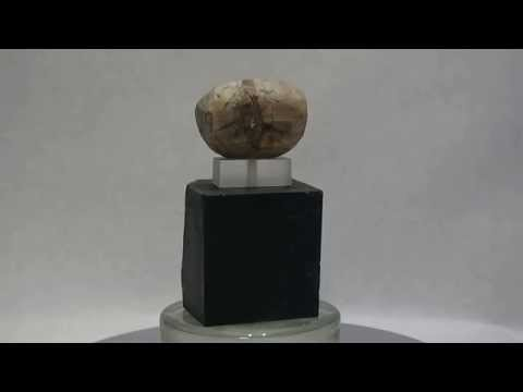 croesus marbre
