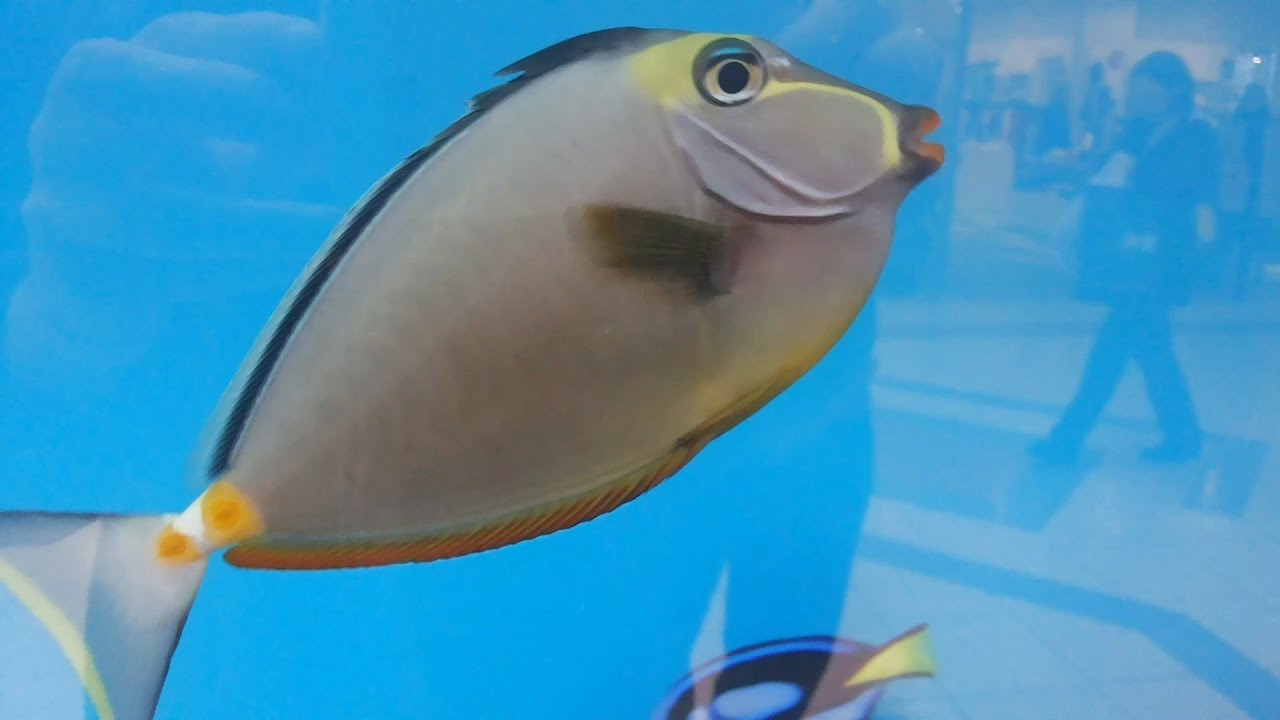 Рыбки в аквариуме - Аквариум в торговом центре - Аквариумные рыбки Нэмо и Дори