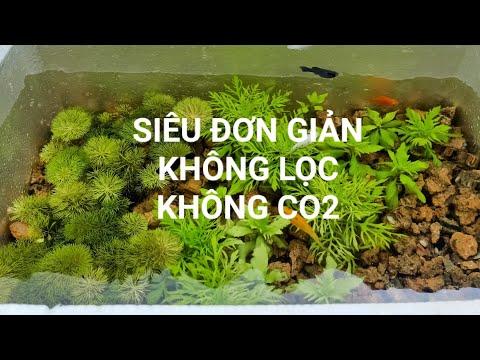 Hướng dẫn Setup Thùng Xốp nuôi cá Thủy sinh siêu Đơn giản||Setup Simple Aquarium with Styrofoam tank