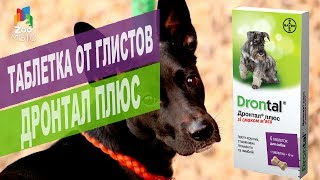 Таблетка от глистов Дронтал Плюс для собак | Обзор таблетка от глистов Дронтал Плюс