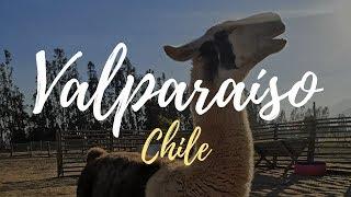 Lhamas, Oceano Pacífico e Valparaíso | Vlog de viagem Chile 2 | Júlia Orige