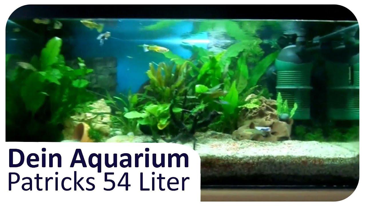 patricks 54l s wasseraquarium dein aquarium 5 youtube. Black Bedroom Furniture Sets. Home Design Ideas