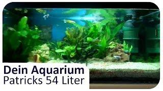 patricks 54l swasseraquarium   dein aquarium 5