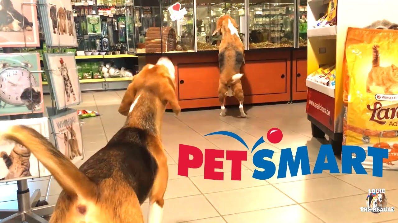 Leash For  Dogs Petsmart
