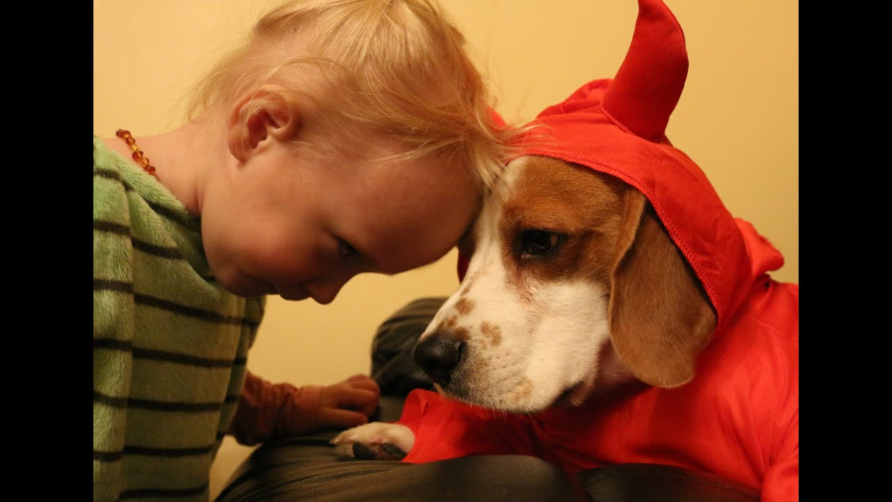 Most Inspiring Baby Brown Adorable Dog - maxresdefault  Pictures_283488  .jpg
