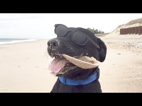 Hilarious Dogs Explore The Beach For The First Time ★ Funny Dogs Video