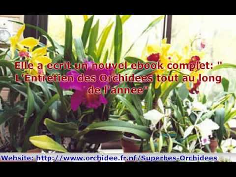 entretien des orchidees youtube. Black Bedroom Furniture Sets. Home Design Ideas