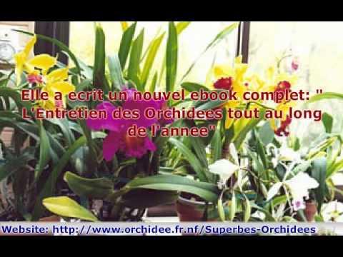 faire refleurir un phalaenopsis orchid e doovi. Black Bedroom Furniture Sets. Home Design Ideas