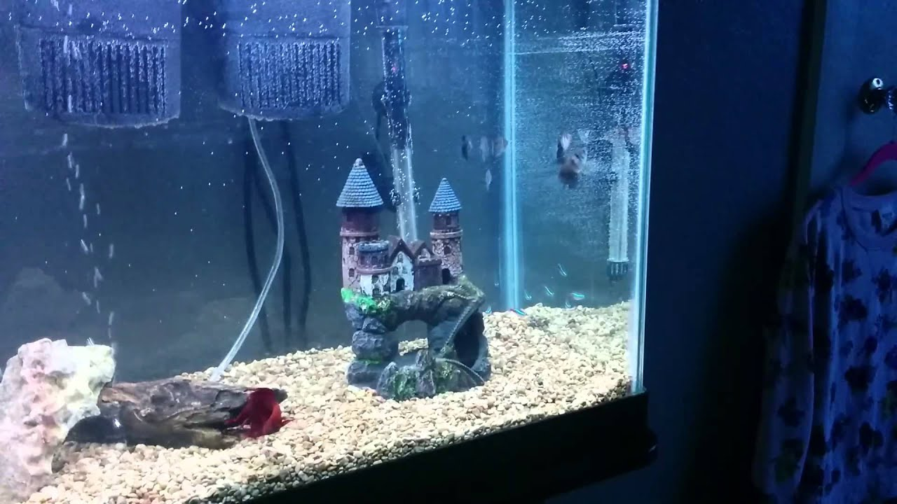 55 gallon fish tank from walmart youtube for 55 gallon fish tank for sale