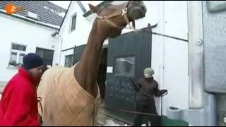 ZDF Volle Kanne - Andrea hilft. Warmblut Willow macht Probleme. Teil 1