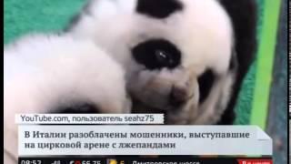 В итальянском цирке собак чау-чау выдавали за панд